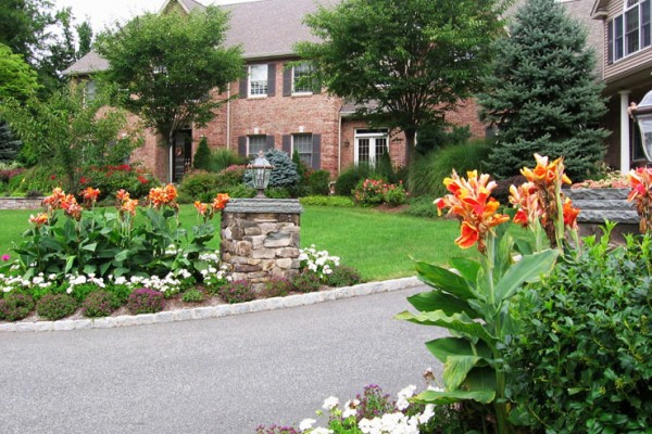 beautiful driveway landscape trees 600x400 Landscaping Plants & Nursery  Specimen Trees & Plants