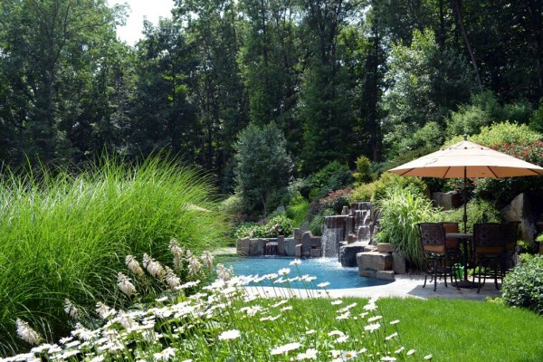 Swimming Pool Landscaping : Specimen tree nursery bergen county nj large rare