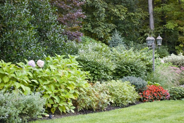 Planting bushes pool NJ company 600x400 Pool & Landscaping Testimonials