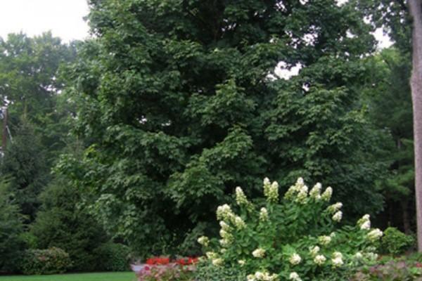 mature landscaping garden planting 600x400 Landscaping & Gardens