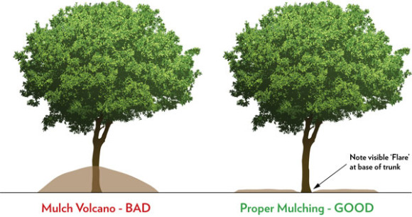 01398813960r mulching landscaping beds MULCH VOLCANOES  THE SLOW KILLER IN THE LANDSCAPING BEDS BERGEN COUNTY NJ
