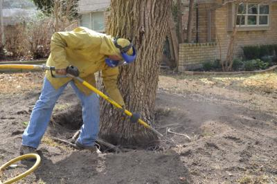 21366398887ndscaping trees air spading 2 WHY LANDSCAPING TREES DIE AFTER THE 1 YEAR WARRANTY   BERGEN COUNTY NJ